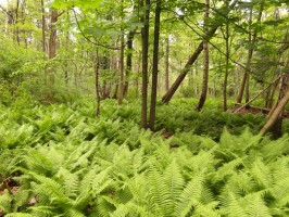 nature_reserve_moor_forest_235834